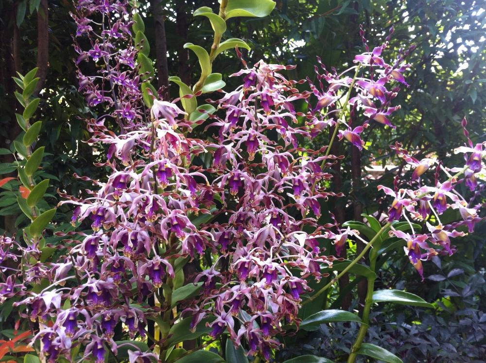 Botanic Gardens and National Orchid Garden (2/6)