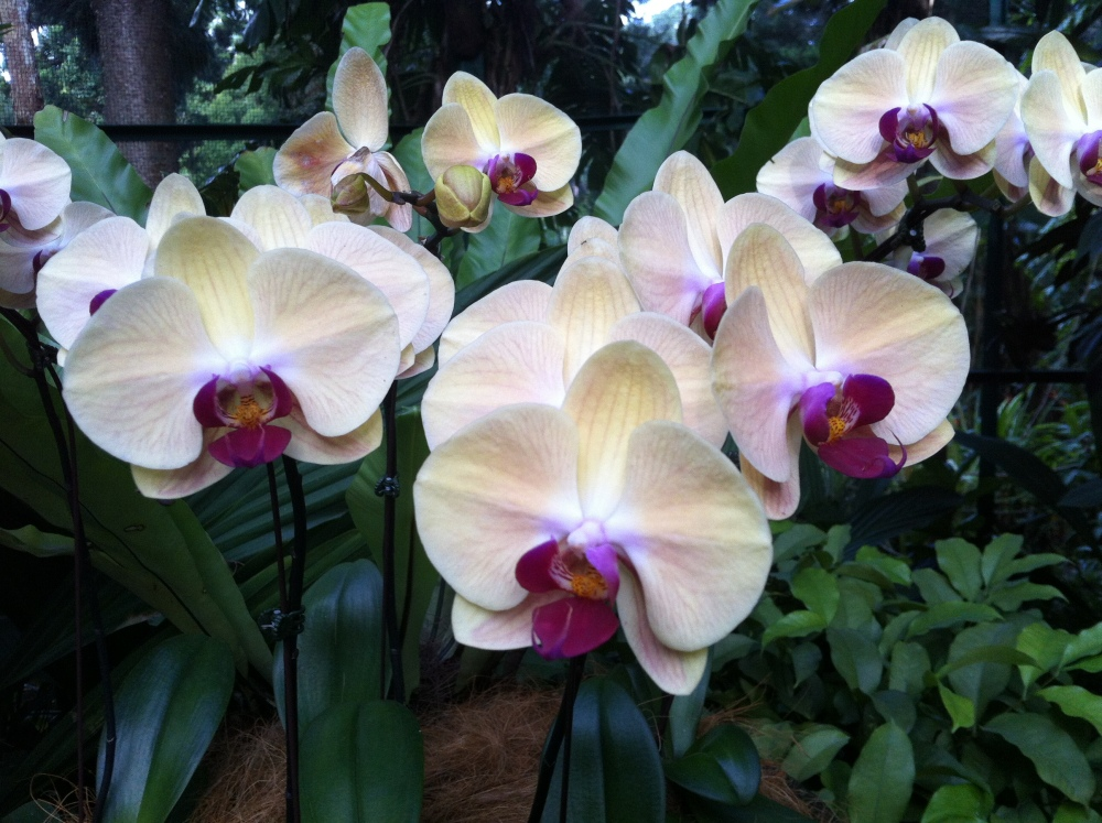 Botanic Gardens and National Orchid Garden (5/6)