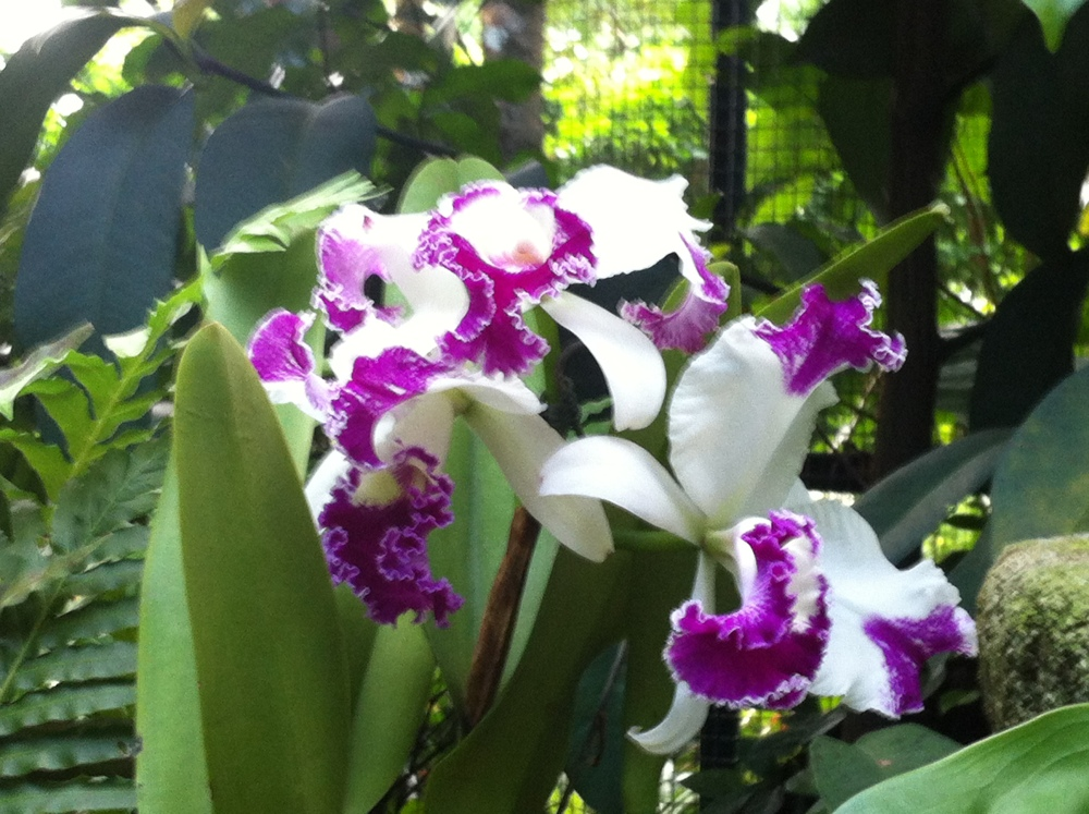 Botanic Gardens and National Orchid Garden (3/6)
